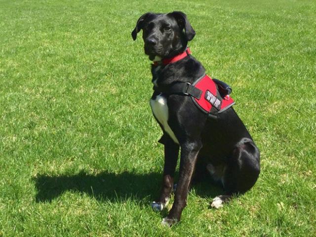 Hearing Ear Service Dog
